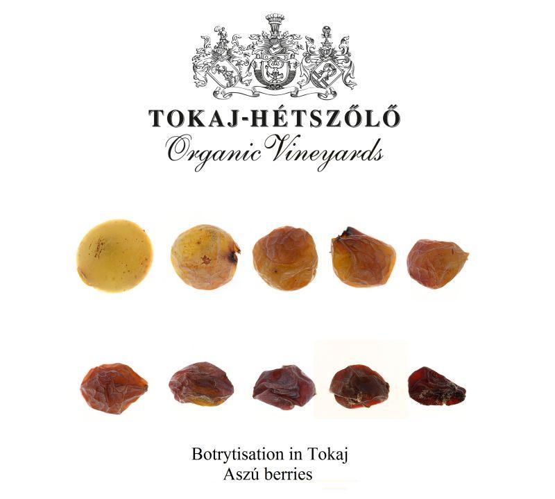Aszú-Furmint Beeren und ihre Reifeentwicklung/Botrytisierung/Edelfäule