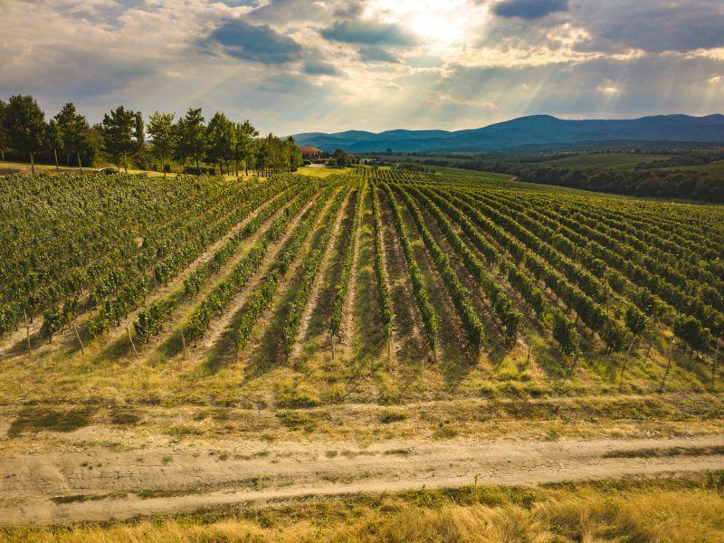 Weinberg Katarzyna Estate Bulgarien ökologisch biologisch