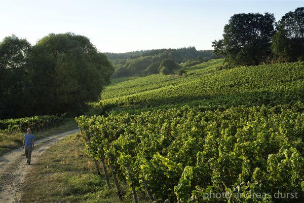 Weingut Peter Jacob Kühn Peter Bernhard Kühn im Riesling-Weinberg