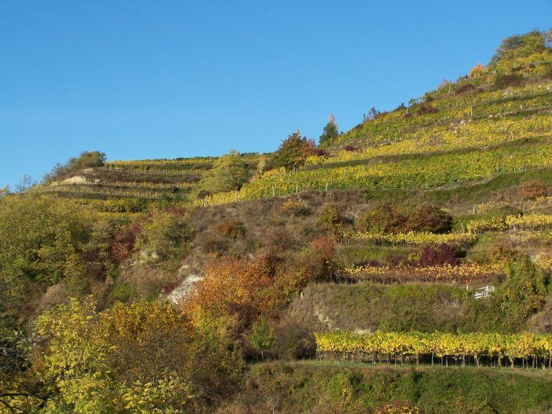 Steile Terrassen im Gebling Weinberg von Sepp Moser