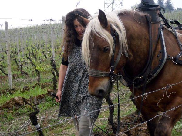 Massimiliana mit Titouan, dem Kaltblutpferd im Weinberg