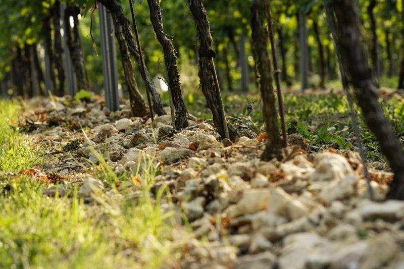 steiniger Boden im Weinberg bei Kühling-Gillot und BattenfeldSpanier
