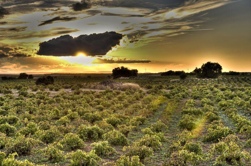 Weinberge der Bodegas Latue in La Mancha
