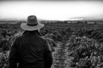 Weinbauer blickt über Bioweinberge im Weinbaugebiet La Mancha