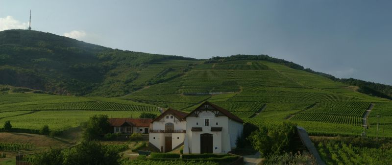 Bio Weingut Tokaj mit Weinbergen