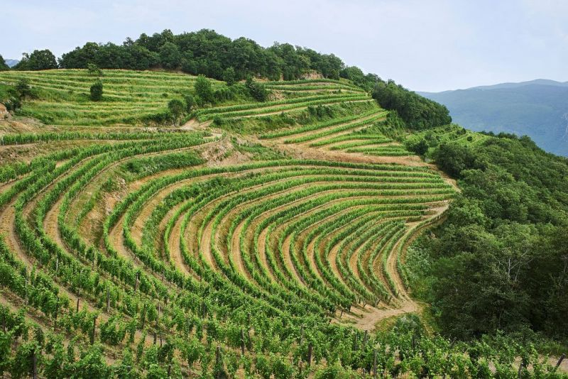 Bioweinberge Guerila Wines Slovenija