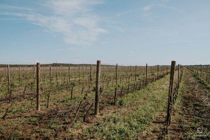 Biologisch bewirtschaftete Weinberge Masseria Cuturi 1881 Apulien